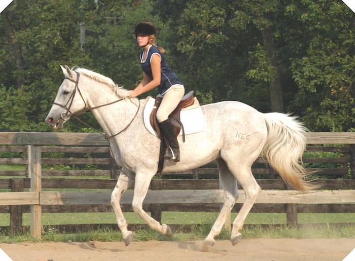 Woodlands_Riding_Academy